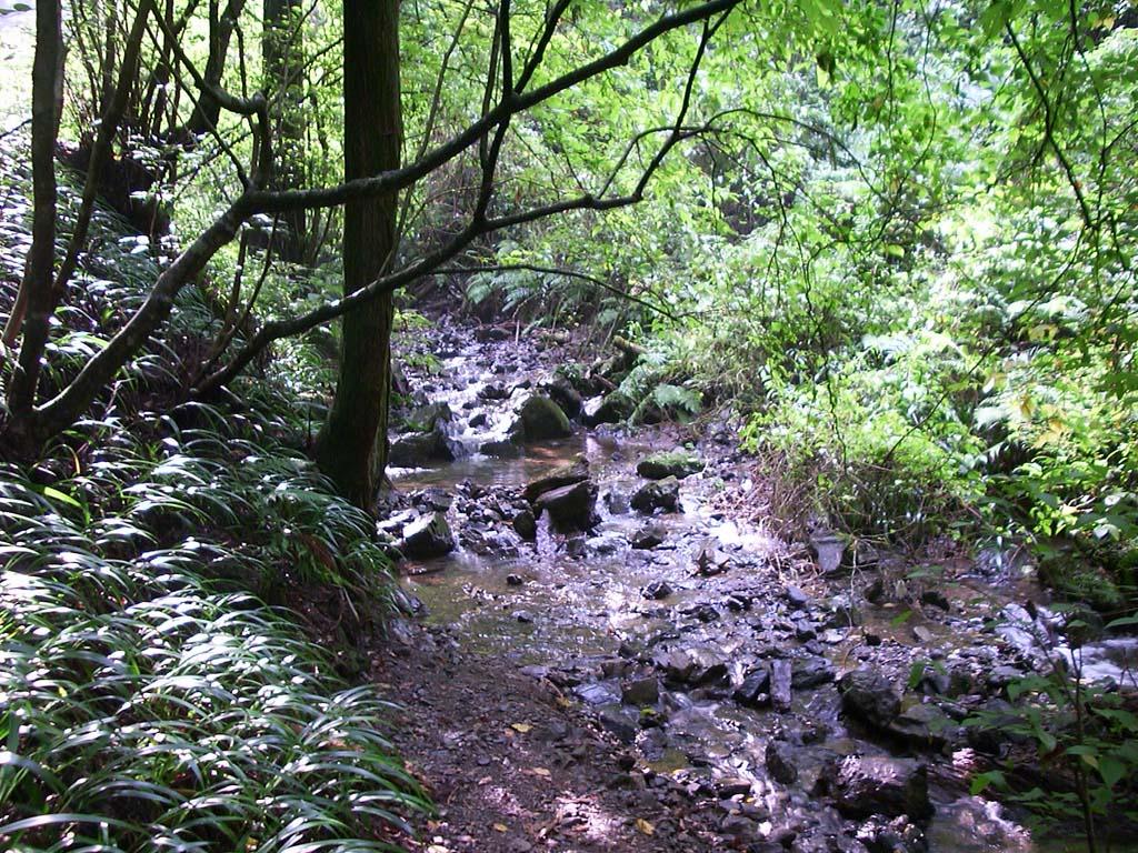 高尾山を流れる小川